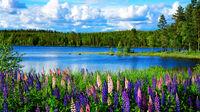 Hemester – det bästa av sommar-Sverige