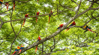 Costa Rica sprudlar av färg och livsglädje